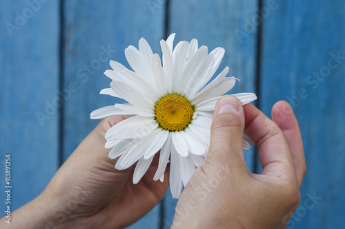 Foto op Canvas Madeliefjes Large white daisy in the hand
