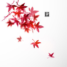 Red Japanese Maple Leaves On W...
