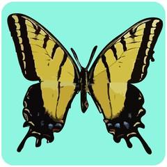 FototapetaSwallowtail Butterfly