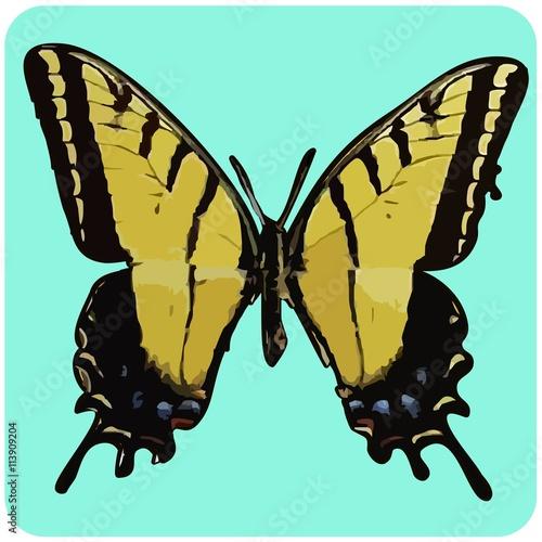 Swallowtail Butterfly - 113909204