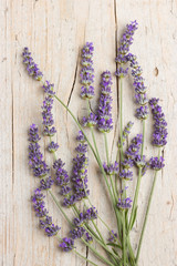 Naklejka Bunch of lavender flowers
