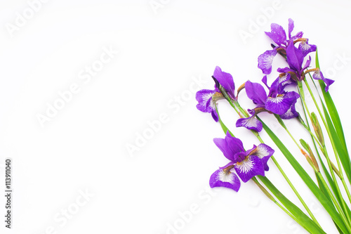 bouquet of lilac flowers iris on a white background. not isolate