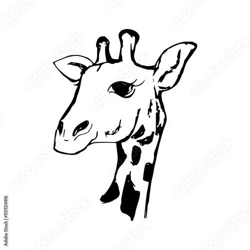 Photo  The head of a giraffe 0