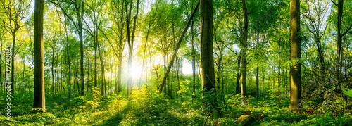 Fototapeten Wald Lichtung im Wald bei Sonnenuntergang