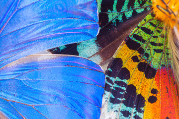Fototapeta Multicolored butterflies wing
