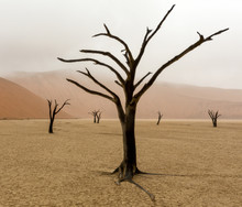 Namibia, Namib-Naukluft Park, Deadvlei. Unusual Rainy Weather In Early Morning.