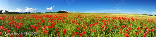 Poster de jardin Poppy Wiese mit rotem Mohn unterhalb der schwäbischen Alb