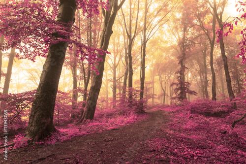 Foto op Plexiglas Crimson Magical path into the foggy forest with red leaves