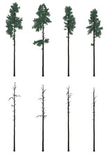 Pinetrees Set In Flat Colors