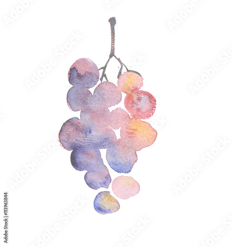 Photo  rosy grape watercolor sketch. hand drawn wine bunch of grapes