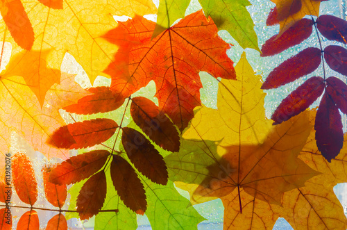 Poster Colorful autumn leaves