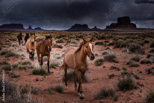 Wild Horses Monument Valley Canvas Print