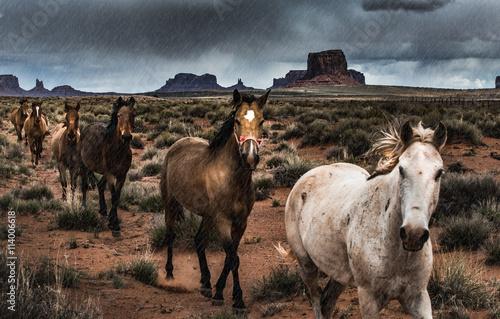 Horses in the Rain Canvas Print