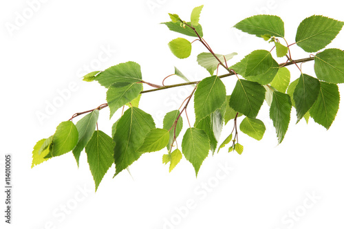 Photo  Branch of green leaves, isolated on white