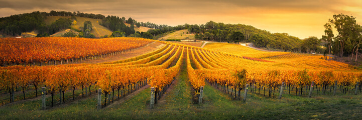 Fototapeta Wino Gorgeous Vineyard in the Adelaide Hills
