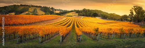 Foto auf AluDibond Weinberg Gorgeous Vineyard in the Adelaide Hills