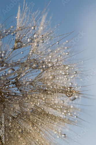 abstrakcjonistyczna-makro-fotografia