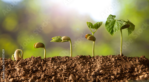 Fototapeta plant growing obraz