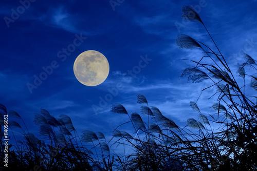 Obraz お月見イメージ ススキと月  - fototapety do salonu