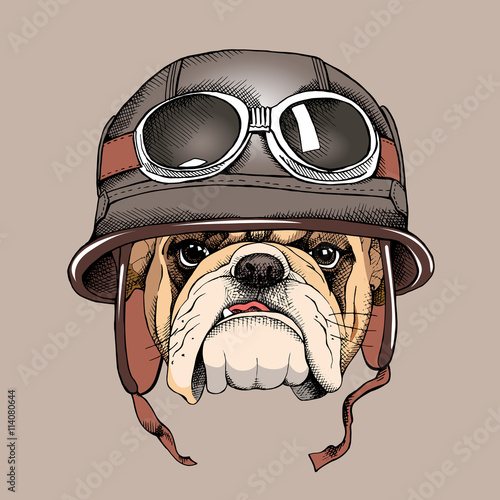 Bulldog portrait in a retro helmet of Racer. Vector illustration.
