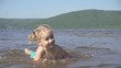 Slow motion.Little girl plays in the water in the river on a sandy bank. Happiness and laughter.