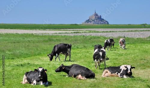 Poster de jardin Vache Paysage de la baie du Mont-Saint-Michel, les vaches normandes dans les pré-salés avec le mont en fond