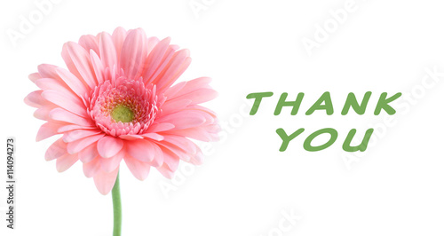 Fotobehang Gerbera Pink gerbera with text Thank You, isolated on white
