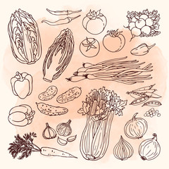 Fototapeta Warzywa Doodle vegetables set with cabbage, carrot, cucumber, radish, tomato, graphic, onion
