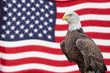 American Bald Eagle and Waving Flag