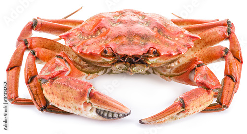 Valokuva  Cooked crab on a white background.