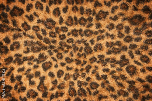 Poster Luipaard fabric pattern leopard pattern for background and texture