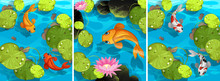 Scene With Fish Swimming In The Pond