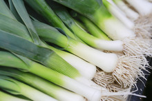 Closeup Of Some Fresh Leeks With The White Bulb And Roots