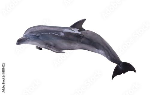 dark grey isolated dolphin