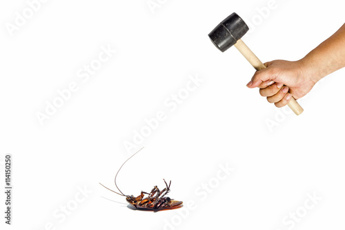 Hand holding hammer intending to kill cockroaches.