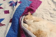 Cat Sleeping On Quilt