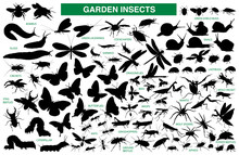 Garden Insect Vector Silhouette Collection