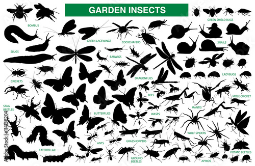 Fotografía  Garden insect vector silhouette collection