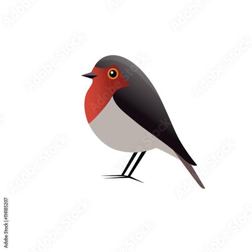 Photo  Robin Bird Vector