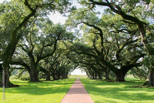 Photo  Oak Alley Plantation
