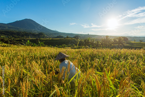 Garden Poster Rice fields Woman working on the rice field in Bali, Indonesia