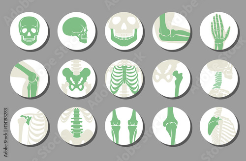 Fotografía  Orthopedic and spine vector icons