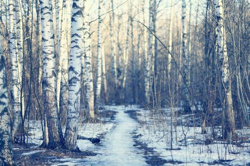 Cadres-photo bureau Bosquet de bouleaux March landscape birch forest background
