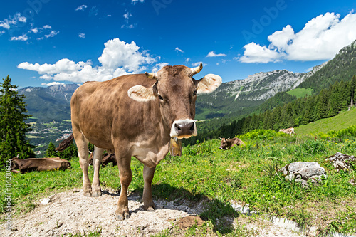 Poster Koe Cow on green grass in front of wonderfull mountain landscape / Kuh auf Wiese vor wundervoller Alpen Landschaft
