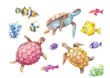 Set Of Sea Turtles, Marine Fis...