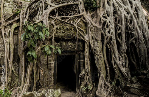 Foto op Aluminium Rudnes Angkor Prohm Khmer ancient Buddhist temple in jungle forest. Famous