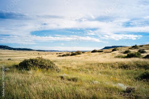 Rolling grassy landscape, colorado - 114264200