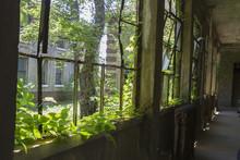 Overgrown Hallway In Ellis Island Building
