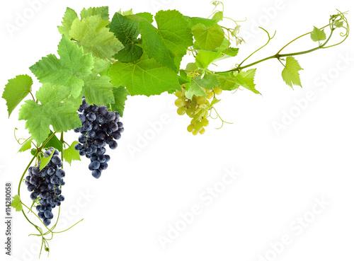 grappes de raisin et feuilles de vigne