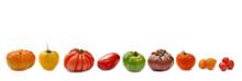 Rangée De  Tomates - Variétés Anciennes Isolées Sur Fond Blanc
